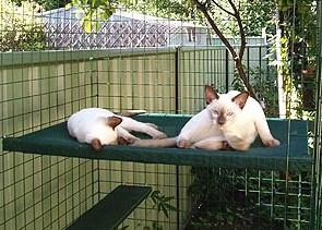 large_hammock