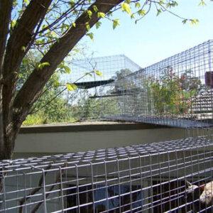Playground on Shed Roof - Catnip Australia Cat Enclosures