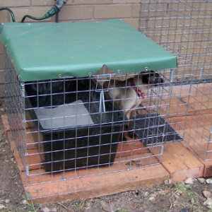 Toilet & Cover with tray - Catnip Australia Cat Enclosures
