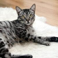 Catnip Australia Cat Enclosures Installers Designer