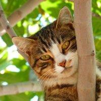 cat-61079_960_720