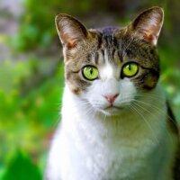 Catnip Australia cat enclosures